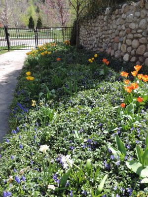 South Lawn flowers and cobblestone wall